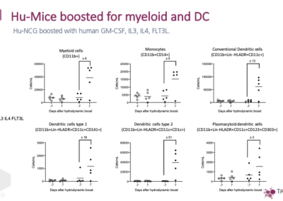Hu-Mice boosted for myeloid and DC